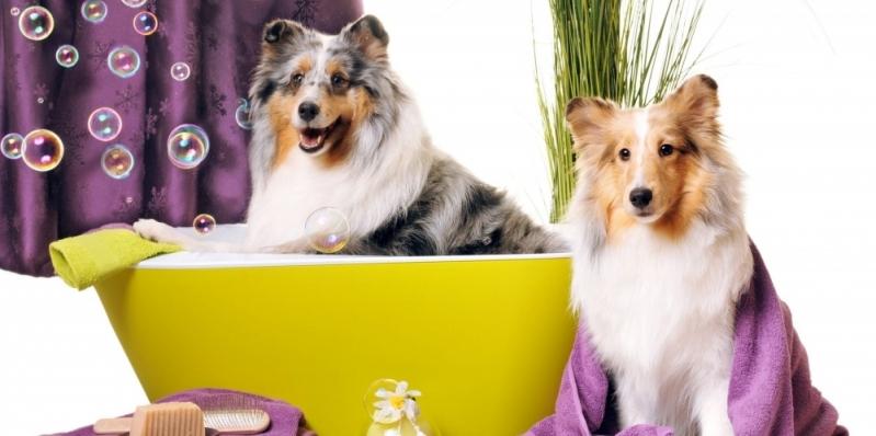Banho e Tosa de Animais Presidnte Altino - Banho e Tosa com Leva e Traz