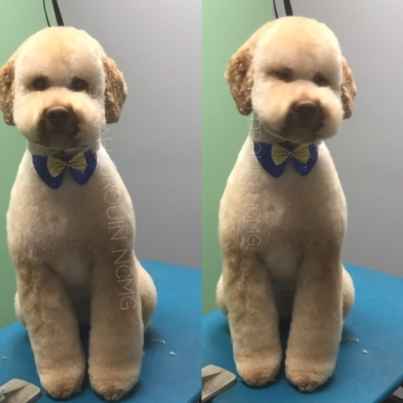 Banho e Tosa de Cachorro Preço São Pedro - Banho e Tosa para Cães Pequenos