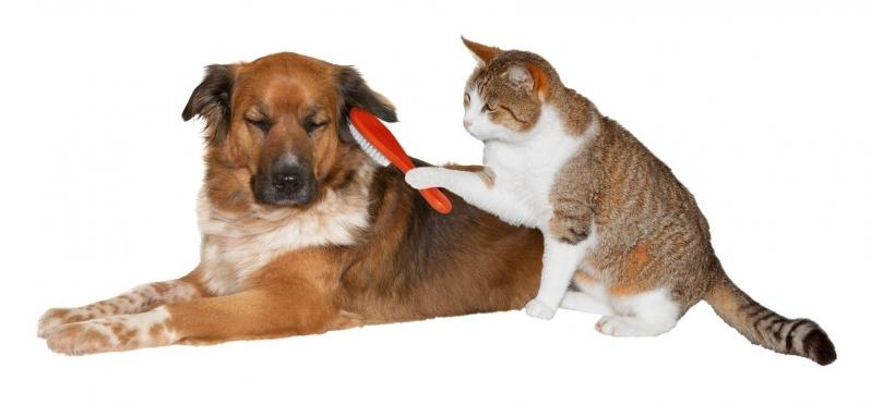 Banho e Tosa Delivery Pestana - Banho e Tosa de Animais