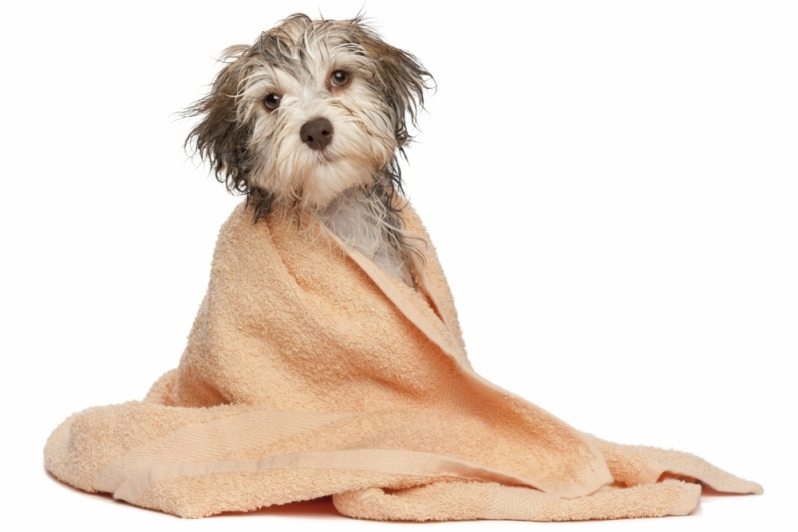 Banho e Tosa e Pet Shop Quitaúna - Banho e Tosa de Animais