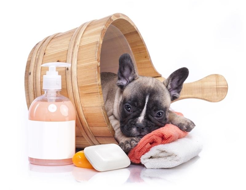 Banho e Tosa para Cachorros Bandeiras - Banho e Tosa Delivery
