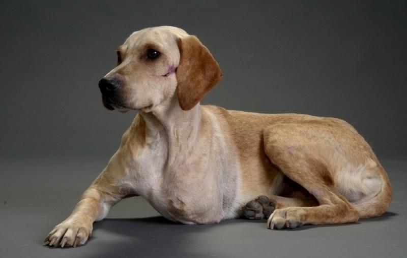 Cirurgia Ortopédica em Cães e Gatos Santa Maria - Cirurgia em Animais de Companhia