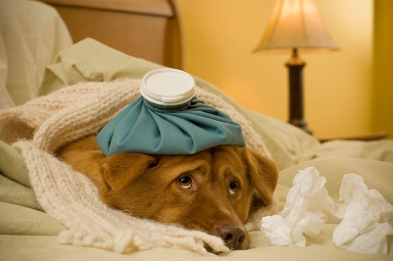 Clínica para Vacina contra Gripe São Pedro - Vacinas em Animais de Estimação