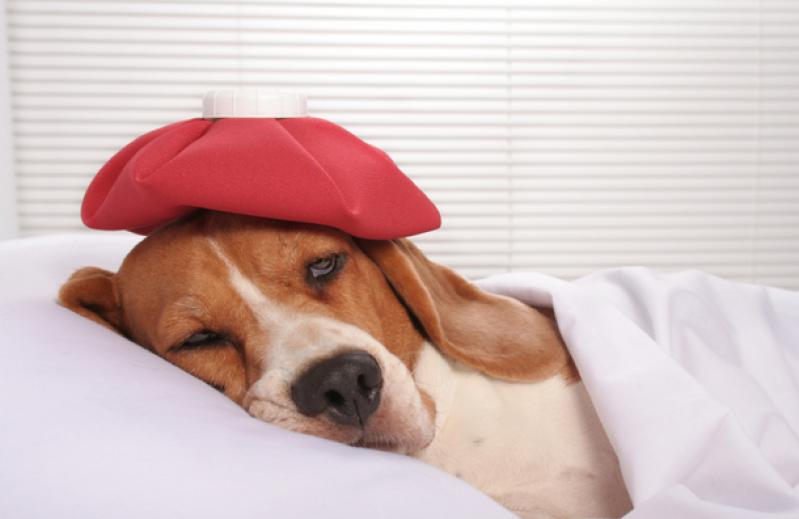 Clínica para Vacina Giardíase Canina Km 18 - Vacinação em Animais de Estimação