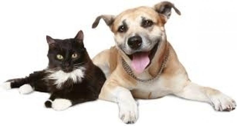 Clínica para Vacinação em Animais de Companhia São Pedro - Vacinas para Animais
