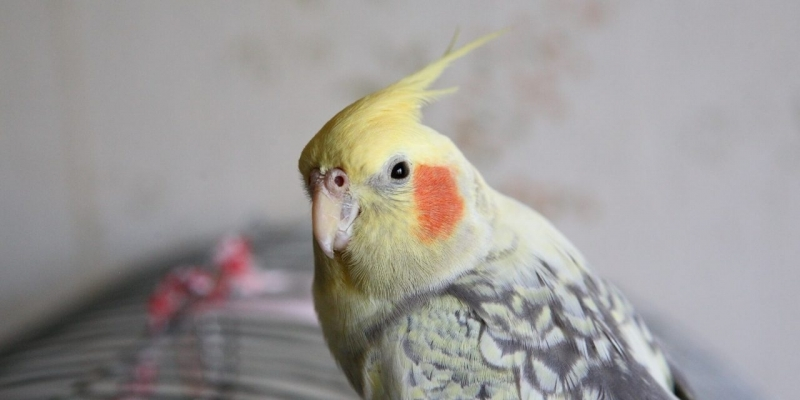 Clínica Veterinária Animais Silvestres Melhor Preço Bandeiras - Clínica Veterinária para Aves