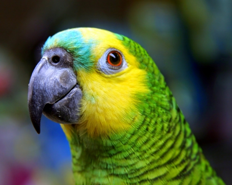 Clínica Veterinária Animais Silvestres Jardim Veloso - Clínica Pet