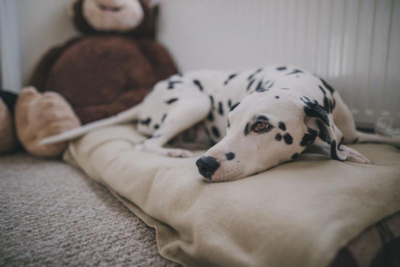 Clínica Veterinária e Pet Shop Quitaúna - Clínica Veterinária para Animais Domésticos
