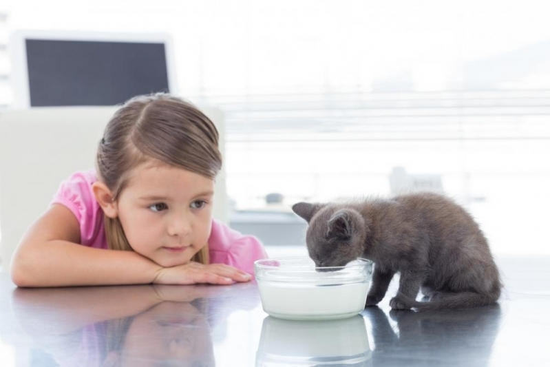 Clínica Veterinária para Animais Domésticos Melhor Preço Vila São Francisco - Clínica Pet