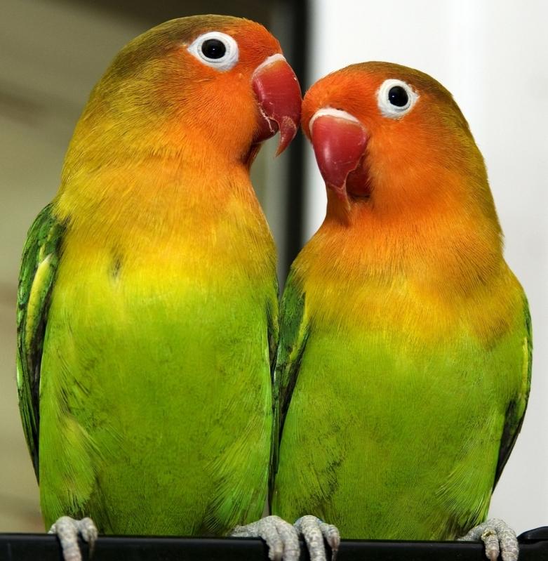 Clínica Veterinária para Aves Melhor Preço Santa Maria - Clínica Veterinária para Cães