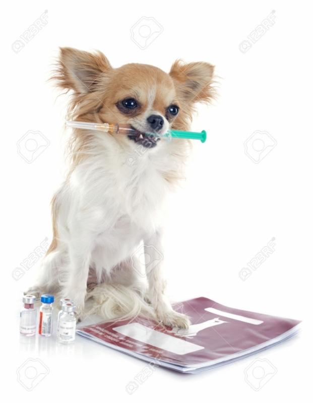 Exame de Sangue em Cães Presidente Altino - Exame de Sangue em Cães