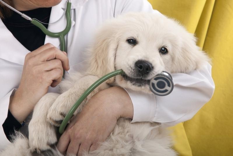 Onde Encontrar Veterinário para Cachorro Jardim Santos Dumont - Veterinário Oncologista