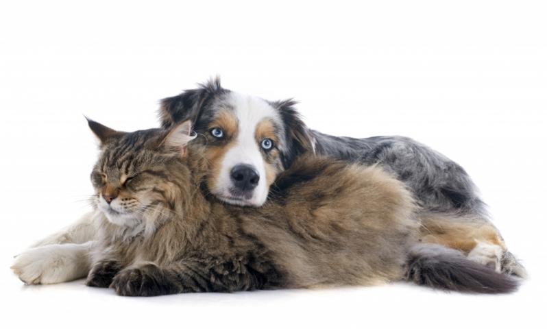 Onde Encontro Vacinas em Animais Domésticos Jardim Roberto - Vacina Giardíase Canina