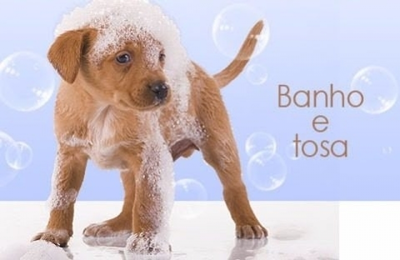 Onde Fazer Banho e Tosa para Cachorros Jardim Roberto - Banho e Tosa com Leva e Traz