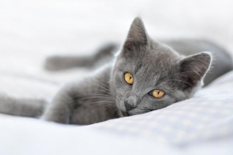 Onde Fazer Castração de Gato Jardim Roberto - Cirurgia em Animais de Pequeno Porte