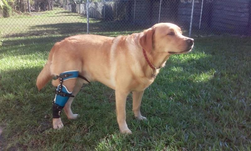 Onde Fazer Cirurgia Ortopédica em Cães e Gatos Jardim das Flores - Cirurgia em Animais de Companhia