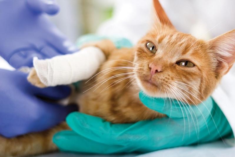 Onde Fazer Cirurgia Ortopédica Veterinária Centro - Cirurgia em Animais de Companhia