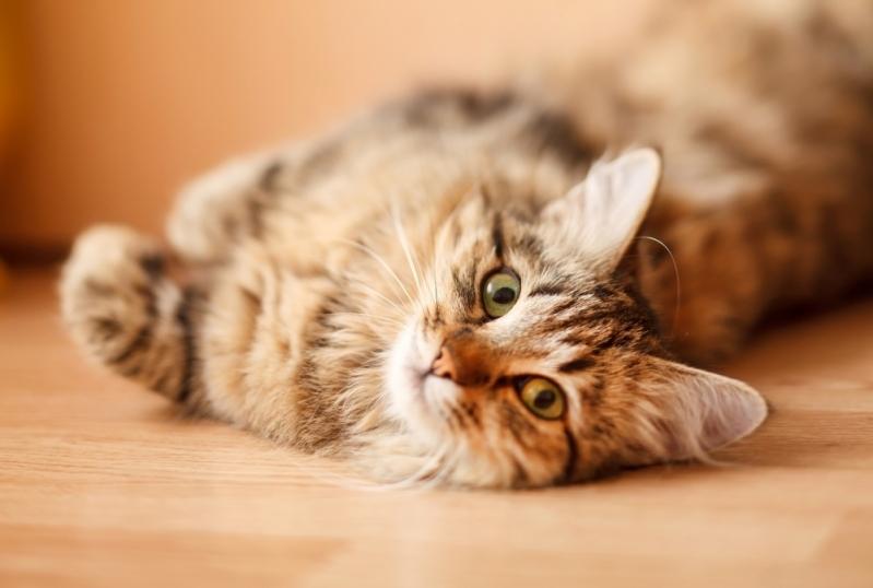 Onde Fazer Exame Laboratorial em Pequenos Animais Jardim Roberto - Exame de Sangue para Gatos