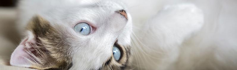 Onde Fazer Exame Parasitológico de Sangue Jardim Veloso - Exame Laboratorial de Animais