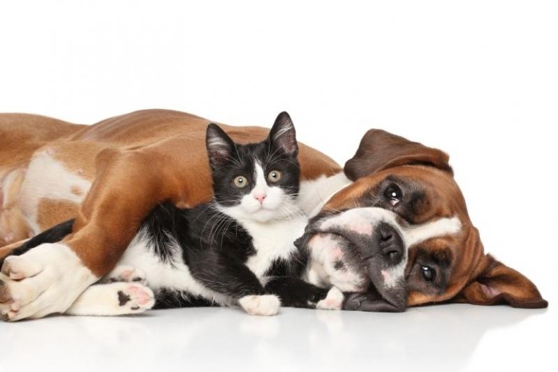 Onde Fazer Exame Parasitológico Veterinário Vila Campesina - Exame de Sangue para Gatos