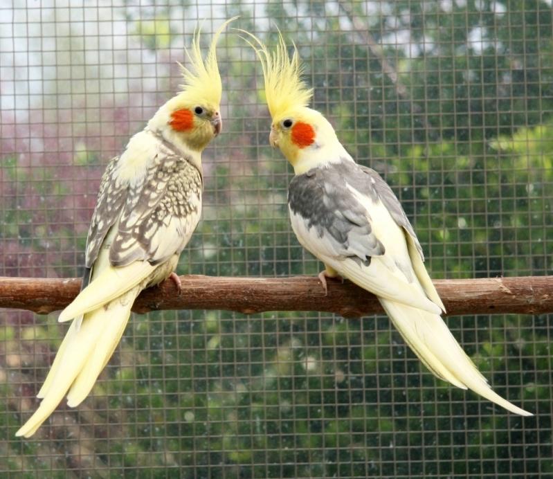 Onde Tem Clínica Veterinária para Aves Granja Viana - Clínica Veterinária e Pet Shop