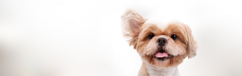 Pet Shop para Banho e Tosa de Animais Jardim das Flores - Banho e Tosa de Cachorro