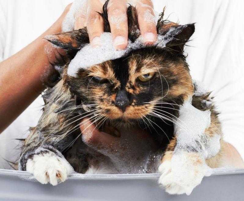 Pet Shop para Banho e Tosa de Gatos Raposo Tavares - Banho e Tosa para Cachorro