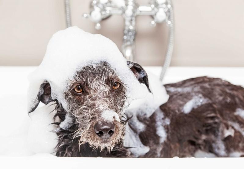 Pet Shop para Banho e Tosa para Animais Domésticos Vila São Francisco - Banho e Tosa para Cachorro