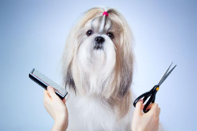 Pet Shop para Banho e Tosa para Cachorro Umuarama - Banho e Tosa Delivery
