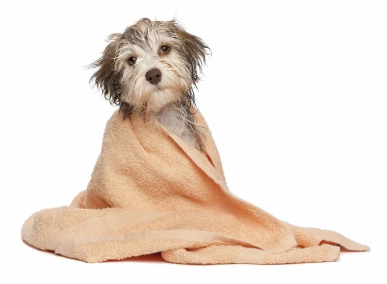 Pet Shop para Banho e Tosa para Cachorros Quitaúna - Banho e Tosa de Gatos