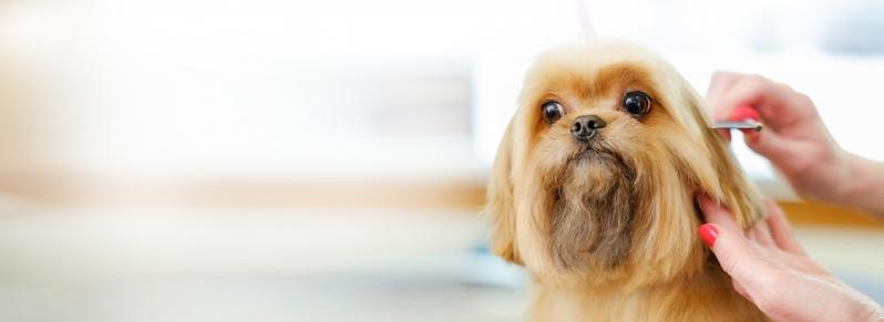 Preço de Banho e Tosa de Animais Jaguaribe - Banho e Tosa para Cães Pequenos