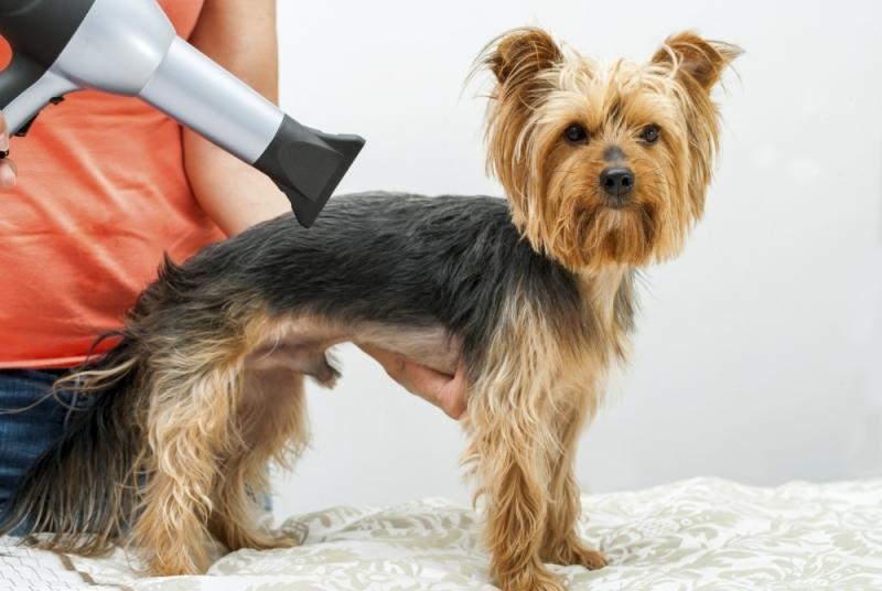 Preço de Banho e Tosa para Animais Domésticos Santo Antônio - Banho e Tosa de Cachorro