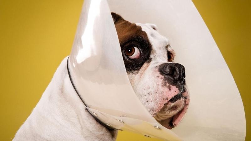 Procuro por Veterinário para Cachorro Jardim Bonfiglioli - Veterinário Oncologista