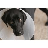 agendar consulta veterinária a domicilio Conjunto Metalúrgicos