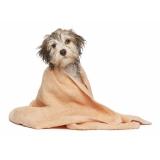 banho e tosa para cachorros