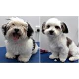 banho e tosa para cães pequenos