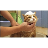 banho e tosa para gatos Santa Fé