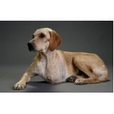 cirurgia ortopédica em cães e gatos Bela Vista