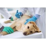 cirurgia de cachorro