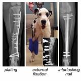 cirurgia ortopédica em cães e gatos
