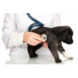 clínica de ecocardiograma veterinário Conjunto Metalúrgicos