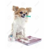 clínica de exame clínico veterinário Bandeiras