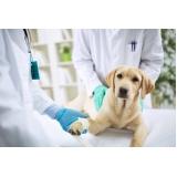 clínica de exame parasitológico veterinário Bela Vista