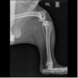clínica de raio x em animais Jardim Roberto