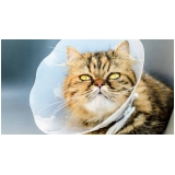 clínica para consulta veterinária felina Santa Fé