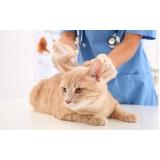 clínica para consulta veterinária para gatos Jardim Sarah