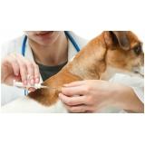 clínica para vacina múltipla canina Bela Vista