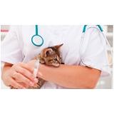 clínica para vacina múltipla gatos Jardim das Flores