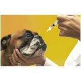 clínica para vacinação em animais de estimação Bela Vista