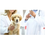 clínica para vacinas em animais de estimação Centro